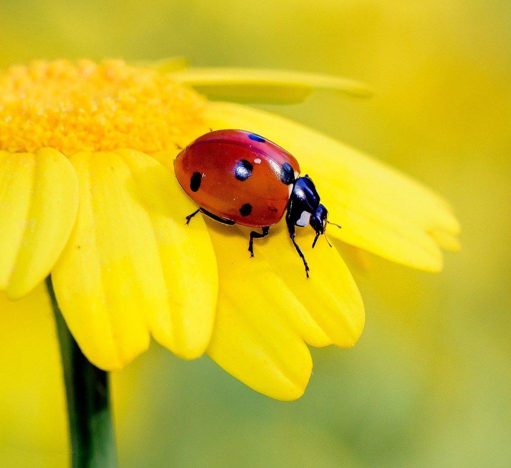 The Wonderful World of Ladybirds