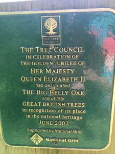 Big Belly Oak