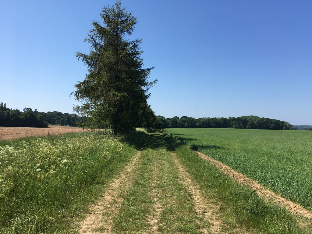 Ashampstead Yattendon Berkshire Walk