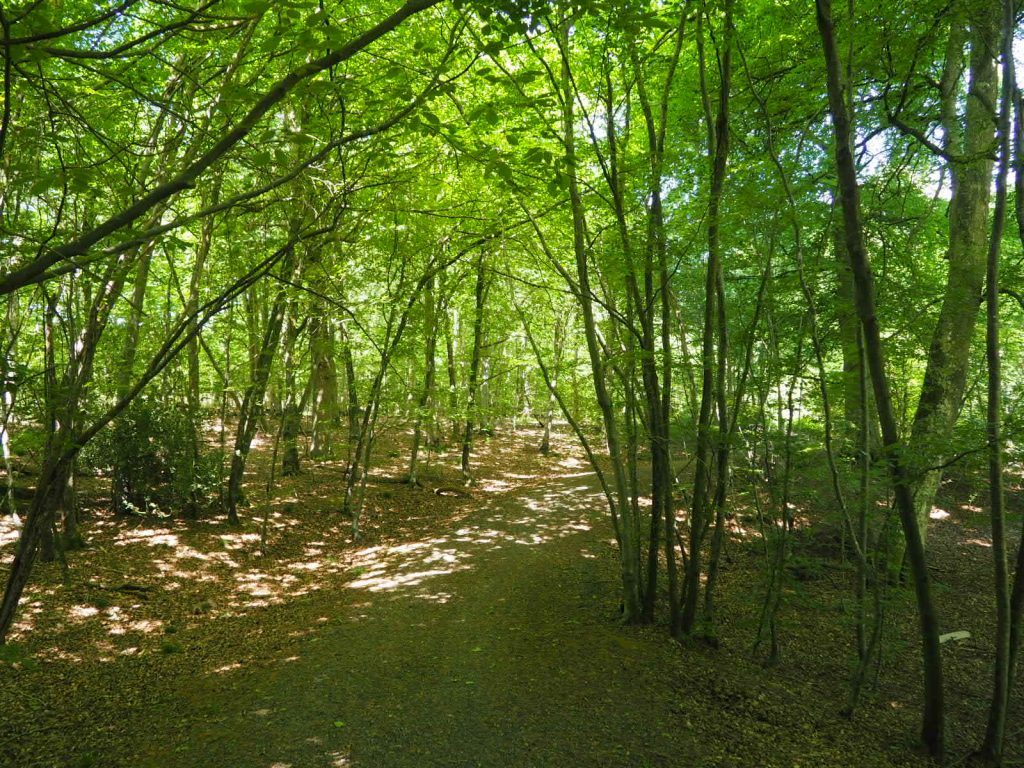 Savernake Forest walk