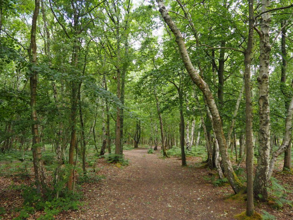 Snelsmore Common Berkshire Walk