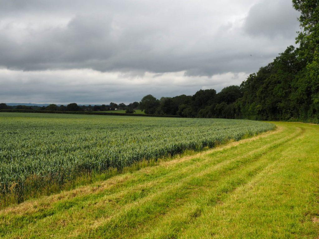 Downland villages walk