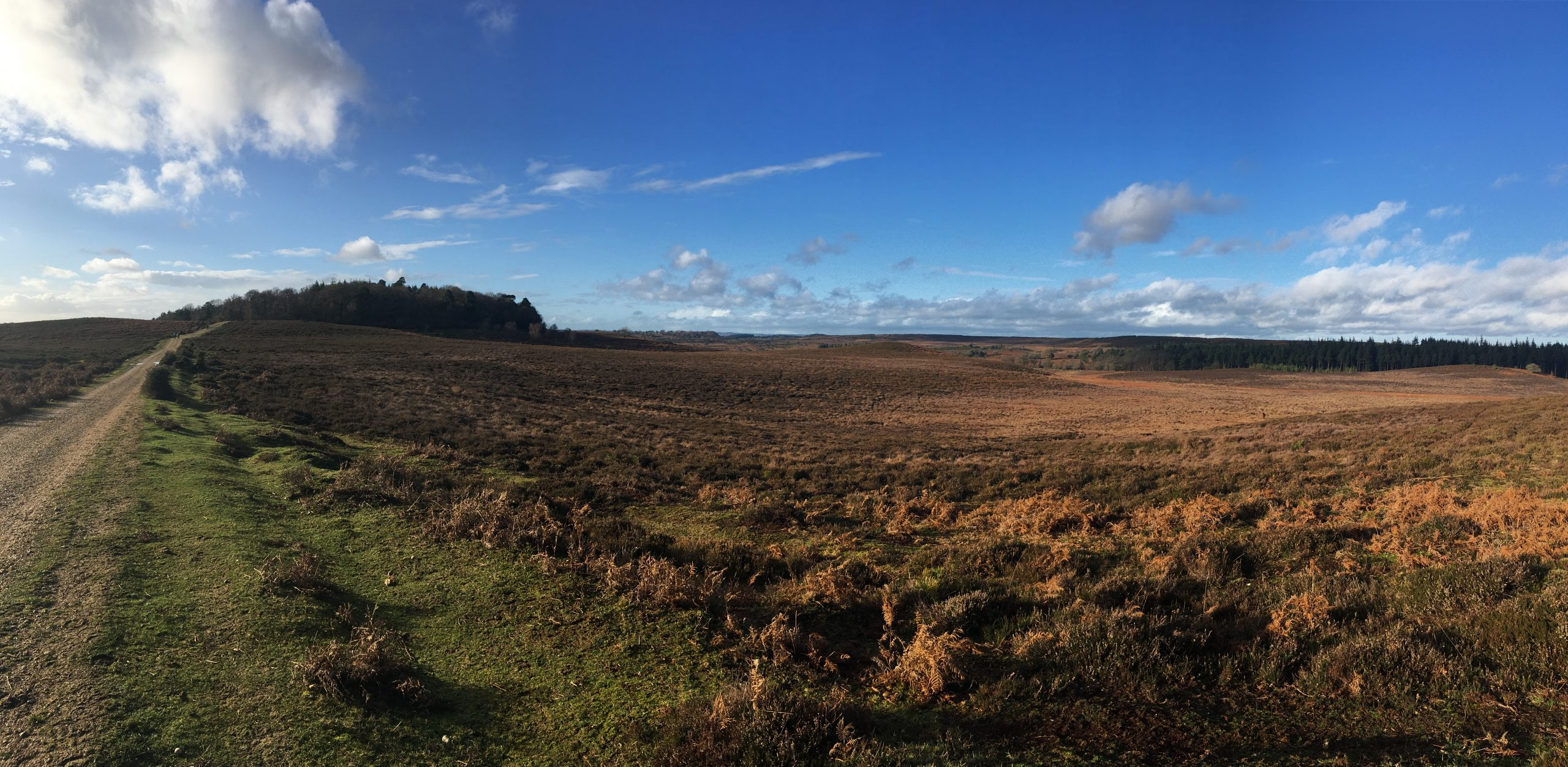 New Forest Walk: Fritham