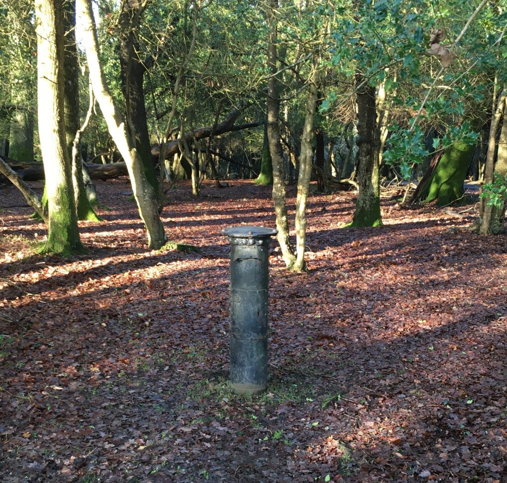 New Forest Fritham Walk
