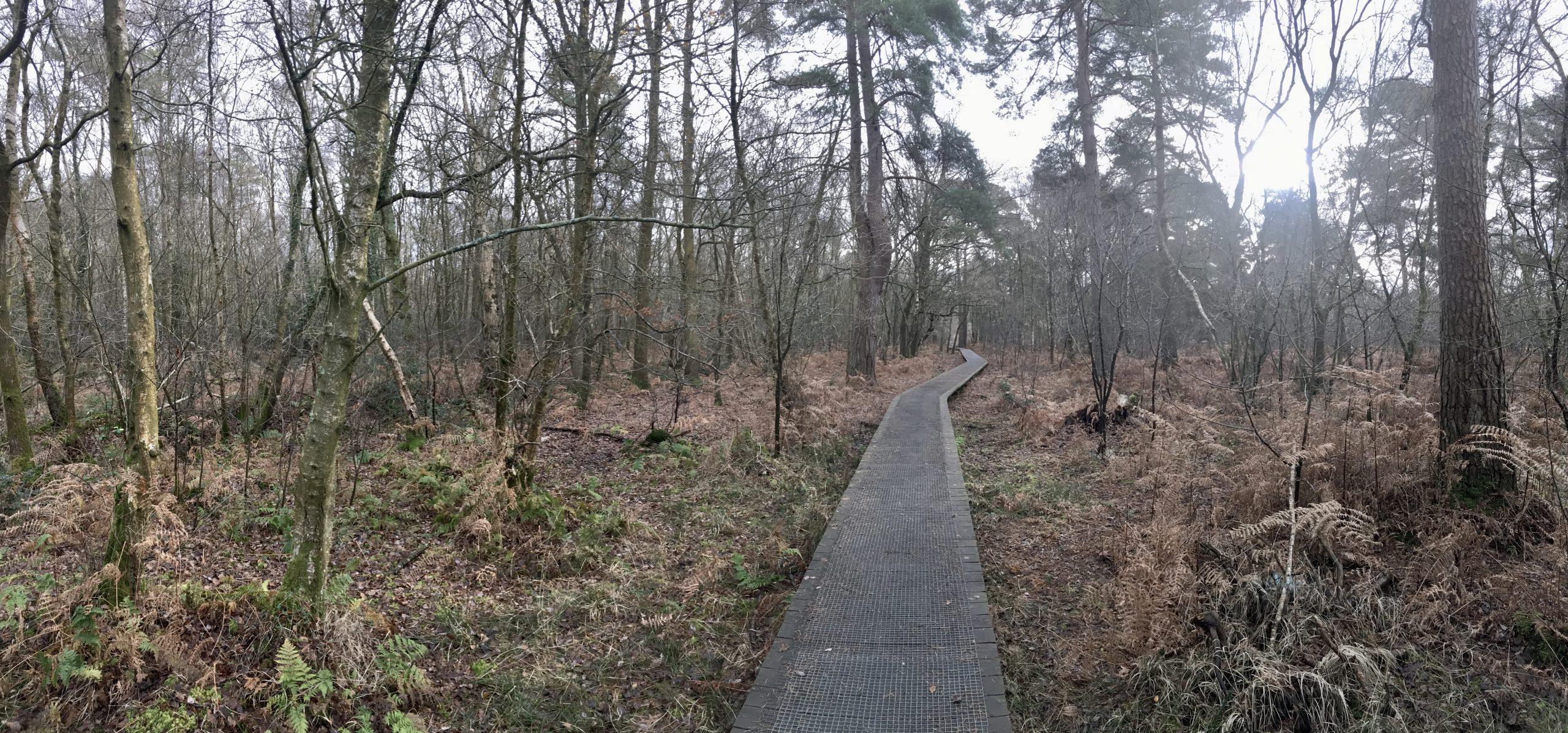 Emer Bog and Baddesley Common
